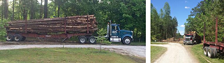 2015 logging